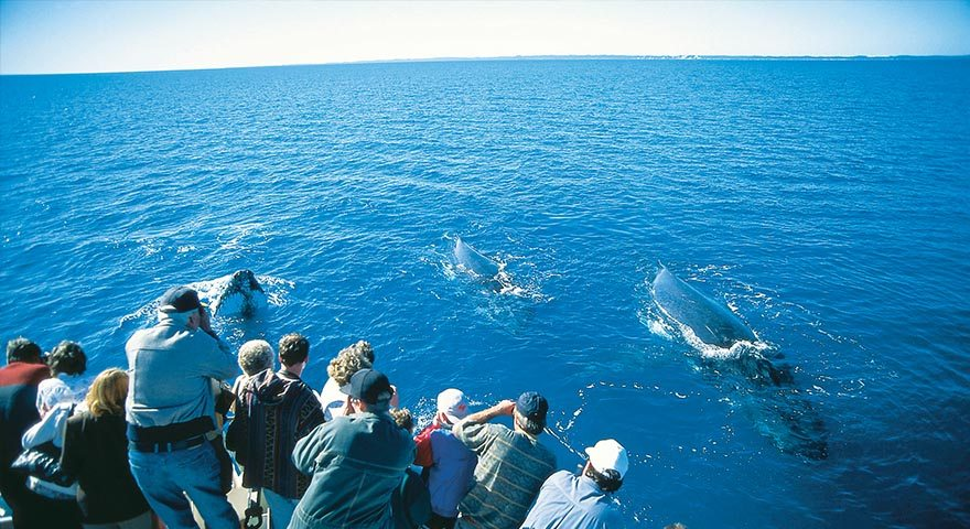 Whale Watching - Fraser Coast