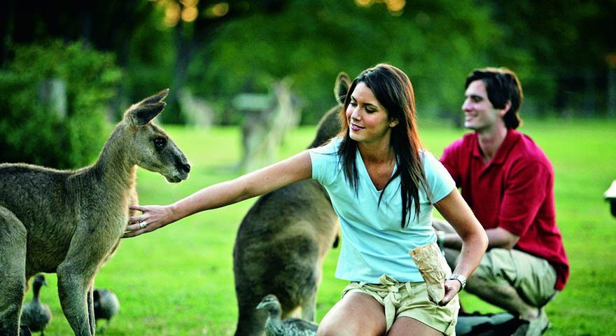 Kangaroo Feeding at Lone Pine Sanctuary